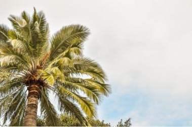 Revolusjon dating Palm Beach hager